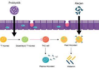 Mevsimsel Alerjiler ve Probiyotikler yeni 1