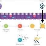 Mevsimsel Alerjiler ve Probiyotikler