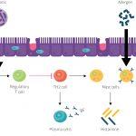 Mevsimsel Alerjilerde Probiyotikler Yaşam Kalitesini Artırıyor Mu ?