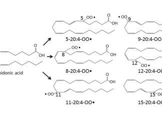 Arasidonik Asit (Arachidonic Acid) yeni