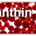 Astaxanthin(Astaksantin ) Nedir ?