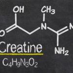 Kreatin ( Creatine ) Nedir  ?