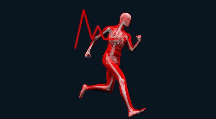 Performans Arttırma ve Vücut Yapısı