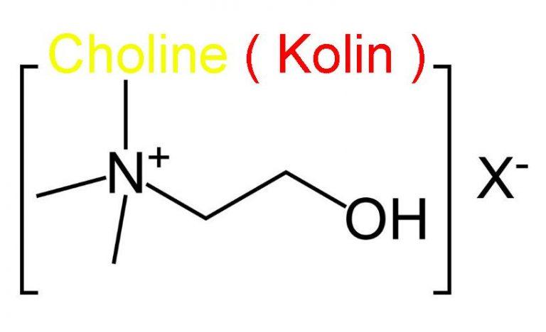 Choline ( Kolin ) Nedir ?