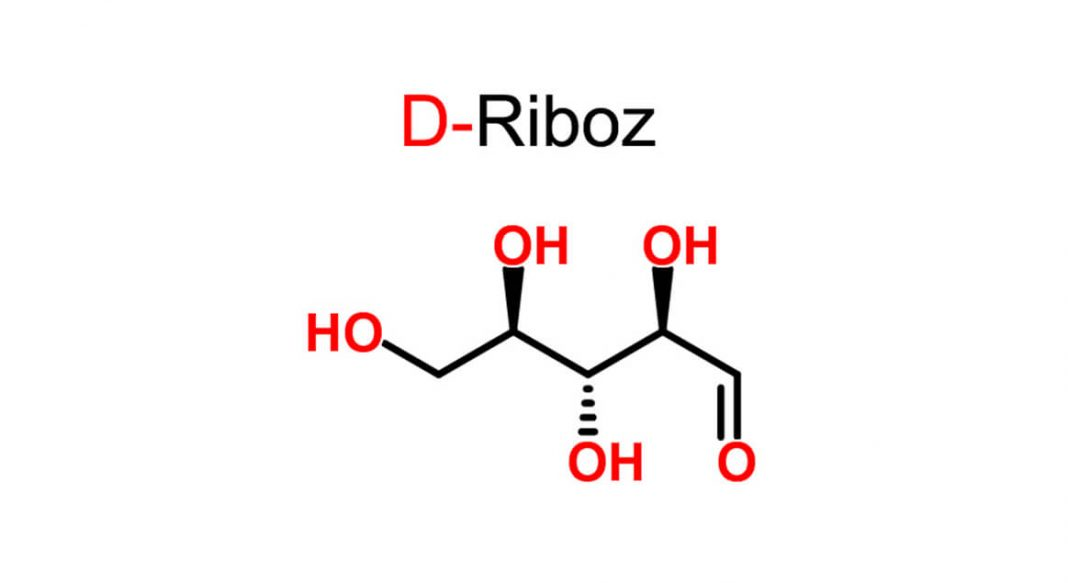 D-Riboz yeni