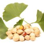 Ginkgo Biloba ( Mabet Ağacı ) Nedir ?