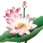 Hint Lotusu Nedir ?