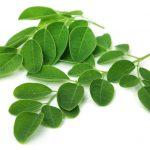 Moringa Oleifera (Moringa Bitkisi) Nedir ?