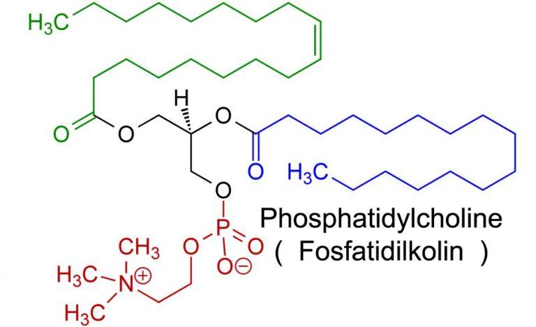 Phosphatidylcholine ( Fosfatidilkolin ) Nedir ?