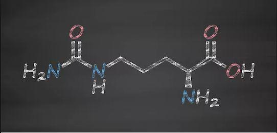 Citrulline (Sitrülin) Nedir ?