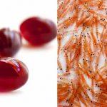 Krill Oil (Krill Yağı) Nedir ?