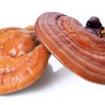 Reishi Mantarı (Ganoderma Lucidum) Nedir ?