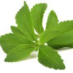 Stevia Bitkisi (Şeker Otu) Nedir ?