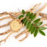 Tongkat Ali ( Eurycoma Longifolia ) Nedir ?