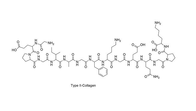 Type-II Collagen ( Tip 2 Kollajen ) Nedir ?