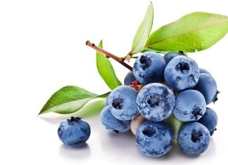 Yaban Mersini ( Blueberry ) yeni meyvesi