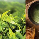 Yeşil Çay, Besin Alımını Engeller Mi?