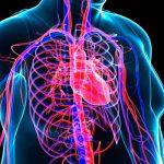 Yumurta Kalp Riskini Arttırabilir mi?