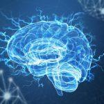 Hafıza Geliştirme (20 Besin)