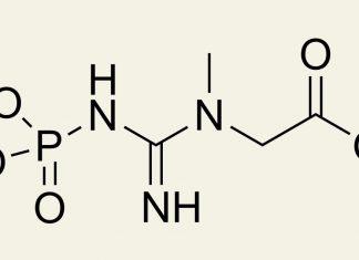 Kreatin steroid midir