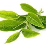 Yeşil Çay (Green Tea) Nedir ?