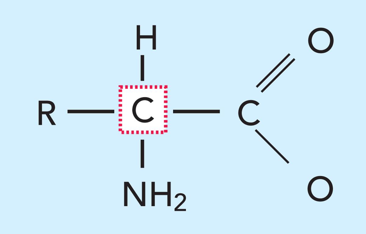 Amino asitlerden protein oluşumu ile Etiketlenen Konular