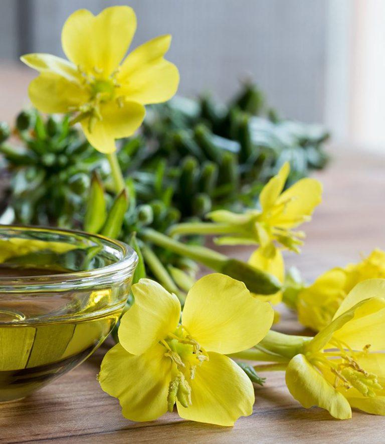 Evening Primrose Oil (Çuha Çiçeği Yağı) Nedir ?