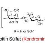 Kondroitin Sülfat (Kondromin) Nedir ?