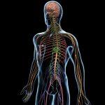 Fiziksel Egzersizin Sinir Sistemini Düzenlemesi