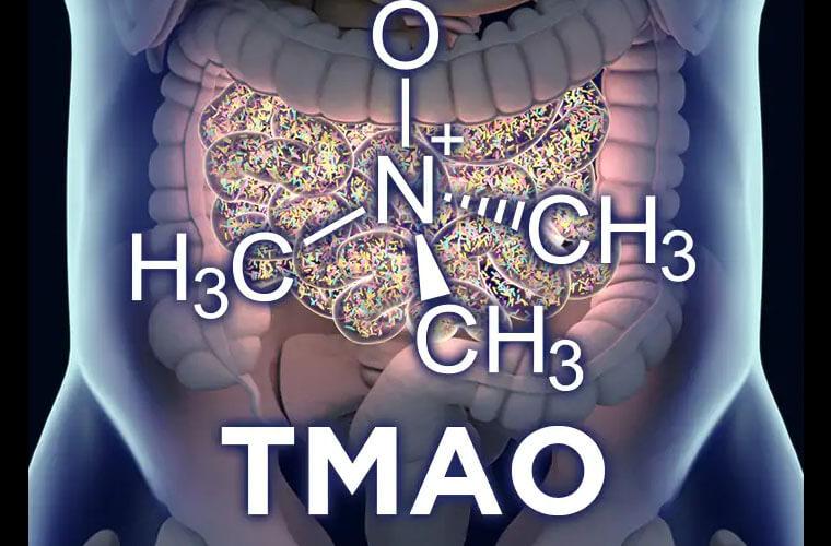 trimetilamin N-oksit